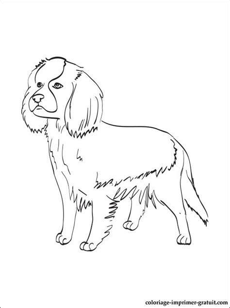 coloring pages of cavalier king charles spaniels coloriage cavalier king charles spaniel a imprimer