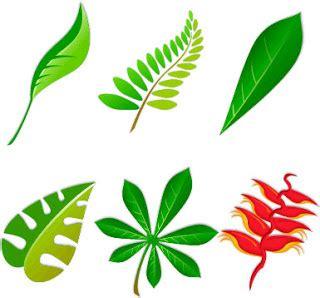 imagenes de hojas verdes solas las plantas partes de la planta
