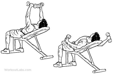 flat bench db fly exercise chang e 3 and set of on pinterest