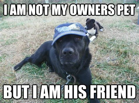 Dog Owner Meme - i am not my owners pet but i am his friend 1300 doller