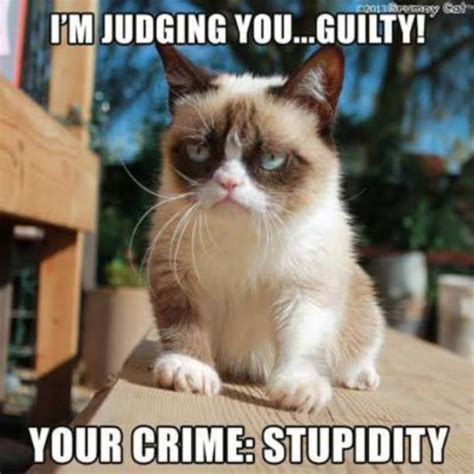 Sarcastic Cat Meme - 2327 best images about grumpy cat on pinterest memes