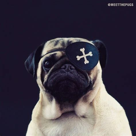bone pugs n harmony 1000 images about loulou co on blinded by the light mondays and pug