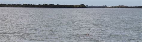 redland bay boat r call for signage to save dugong from jetskis and boaties
