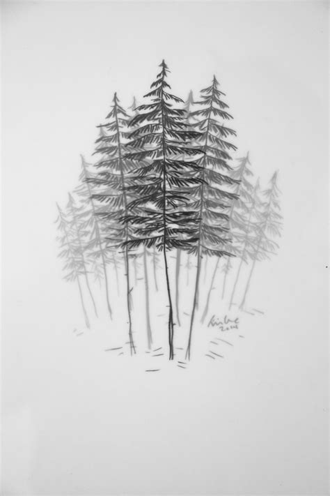 cedar tree tattoo yellow cedar grove 8 x 10 framed graphite on layered