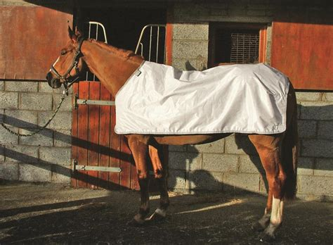 Rambo Rug Liner by The Best 28 Images Of Rambo Rug Liner Rambo Duo 2 In 1 Turnout Rug Free 100g Liner Worth 163