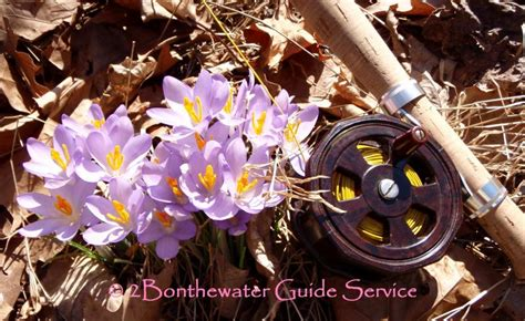 ordinary Things To Do Before Moving Into New House #5: spring_flowers.60150702_std.jpg