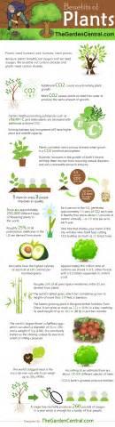 Benefits Of Houseplants benefits of plants infographic