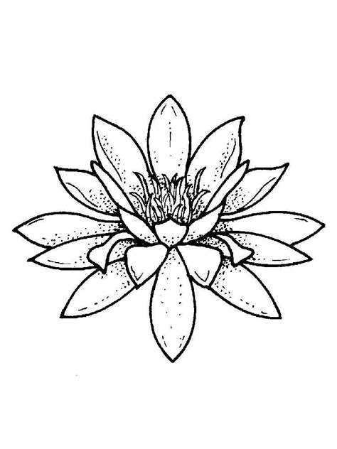 coloring page lily flower water lily coloring pages download and print water lily