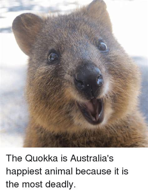 The Quokka Is Australia's Happiest Animal Because It Is ...