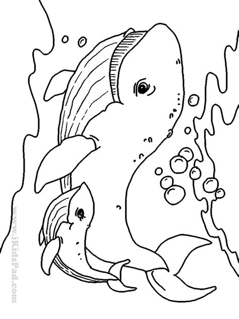 coloring page ocean animals free coloring pages of c ocean