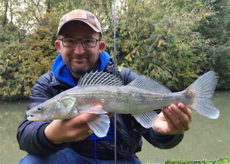 river thames zander light rock fishing lrf