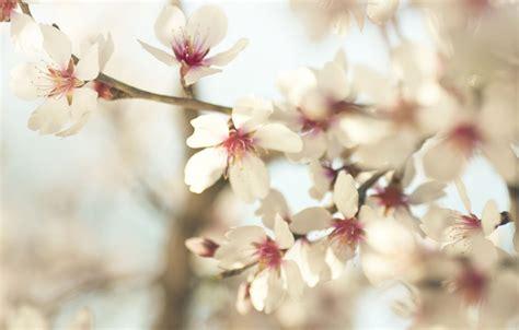 Imagenes De Flores Invernales   cu 225 les son las flores de invierno erenovable com