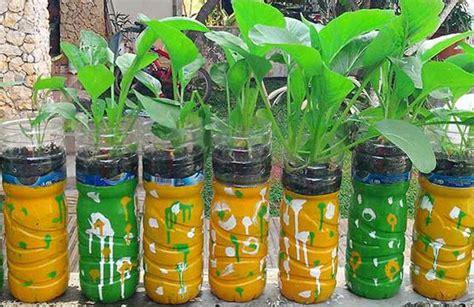 menanam mawar hidroponik cara menanam hidroponik sederhana berkebun itu sehat