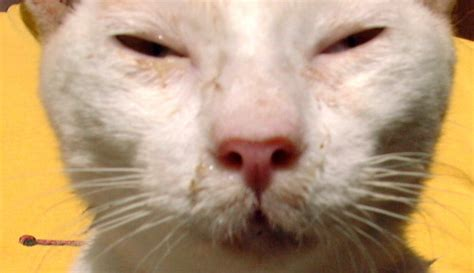 sneeze treatment 302 found