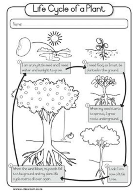 cycle of plants and animals worksheets rachelle richardson ledet worksheet plant cycle teaching when i become a