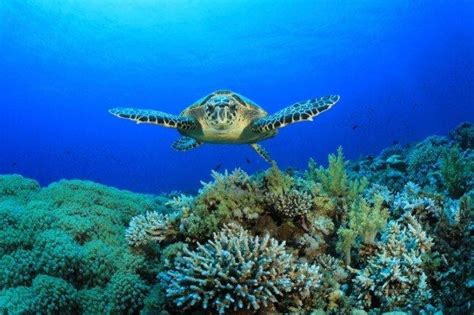 1513 best images about sea 17 best images about sea diving on dive in philippines and scuba diving