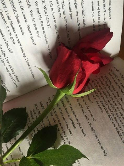 book red  rose aesthetic roses rose wallpaper