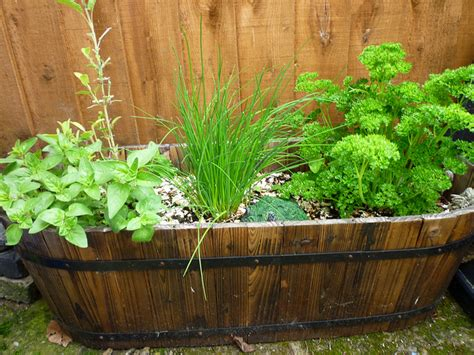 kitchen herb garden ideas kitchen herb garden ideas photograph wooden tub of herbs