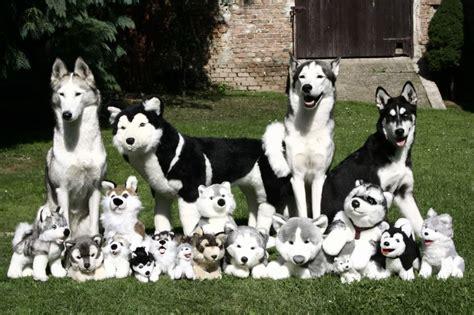 imagenes de la familia de animales una foto de la familia al completo schnauzi com