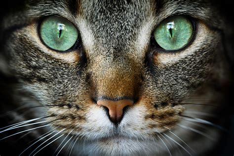 imagenes cool de gatos praxia gatos praxia cl 237 nica veterinaria