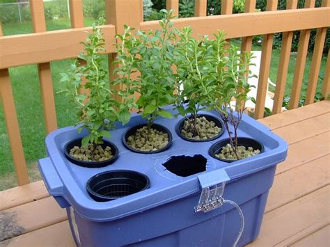 beginners guide  hydroponic gardening gardening channel