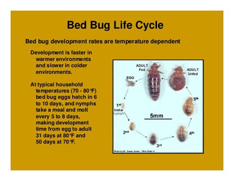 bed bug reproduction rate how to sleep tight and not let the bed bugs bite