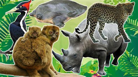 Animal World 5 top 5 endangered animals uzoo animals