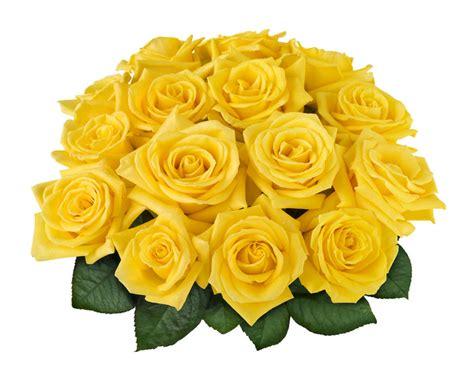 imagenes de flores amarillas image gallery rosas amarillas