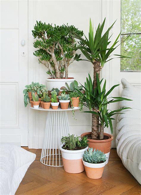 plante de chambre des plantes dans la chambre une bonne id 233 e enfant
