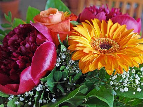 fiore da regalare ad una ragazza consigli di flora archives scelte per te