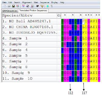 f protein ndv molecular pathotyping of newcastle disease virus from