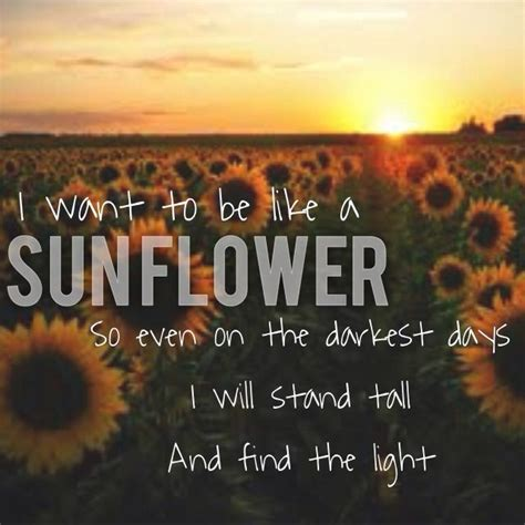 Wedding Quotes About Light by I Want To Be Like A Sunflower Quote Light Sunflower