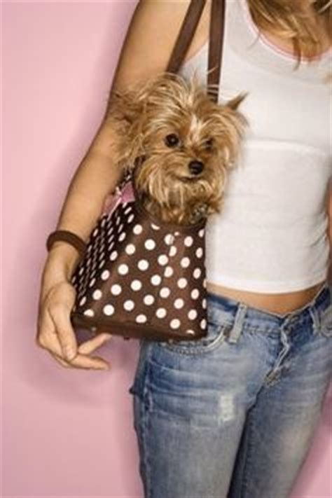 teacup yorkie diapers teacup yorkie be ultra careful about this pet bakery