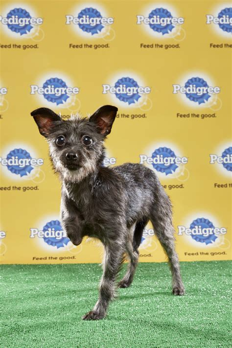 who won puppy bowl 2017 the puppy bowl explained vox