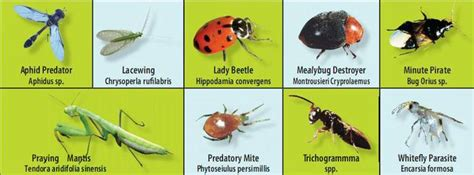 friendly insects indiatimescom