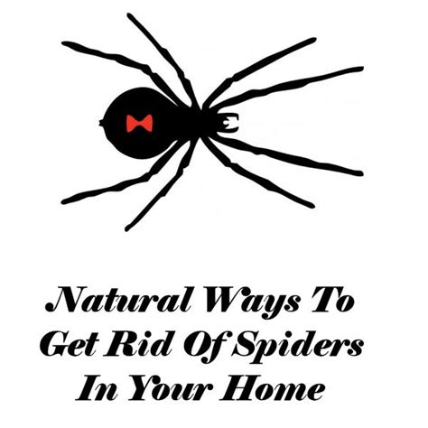 how to get rid of spiders from christmas tree ways to get rid of spiders in your home my honeys place