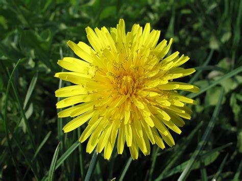 fotografie di fiori primavera nomi e immagini di fiori di primavera 35 foto
