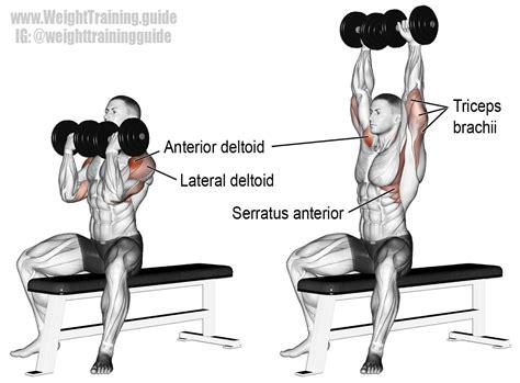 arnold press exercise and shoulder exercises exercises shoulder workout