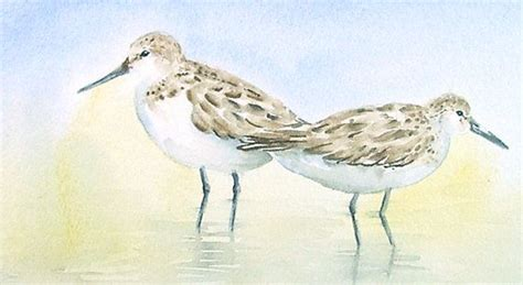 1000 images about sandpiper decor on canvases originals and paintings