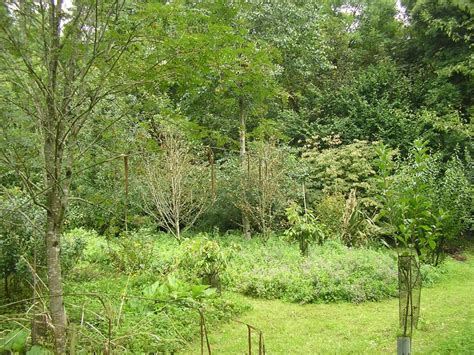 Garden Forest by What Is Forest Gardening Rubha Phoil And Earth Ways