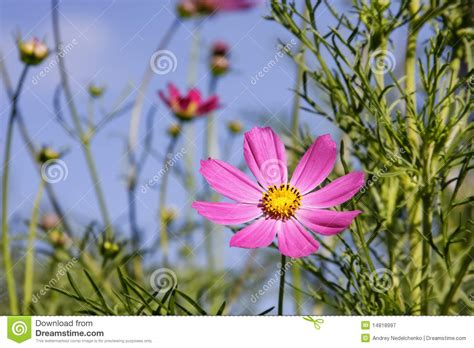 imagenes flores salvajes aster de las flores salvajes fondo hermoso belleza