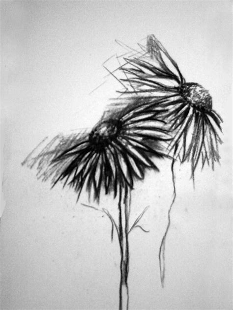 wilted daisy drawing www pixshark com images galleries