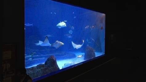 aquarium design international ltd hualien farglory ocean park crossley architects