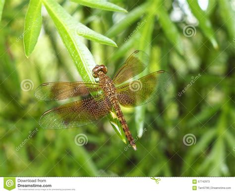dragonfly house design dragonfly house stock photo image 57742973