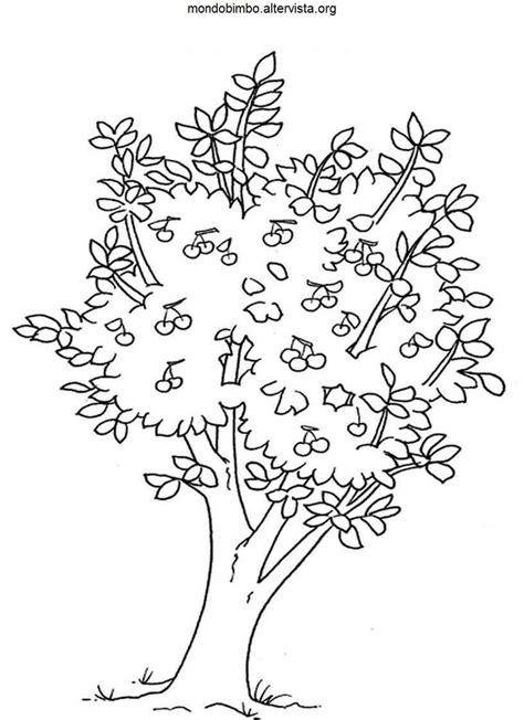fiori ciliegio disegni alberi da frutto da colorare mondo bimbo
