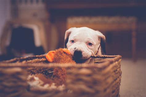 how to stop a puppy from chewing do chew deterrents really work nation