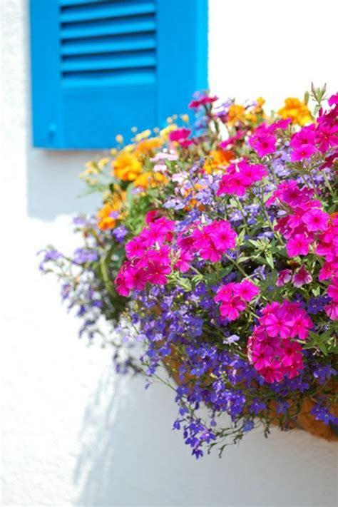 Winterbepflanzung F R Balkonk Sten Und K Bel Garten 5400 by Blumenk 228 Sten Bepflanzen Sommer Sommer Bepflanzte Blumenk
