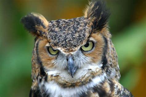 owls weird ass birds val city gal