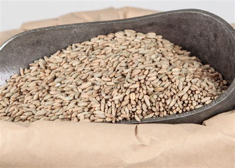 whole grain rye 50 lb whole grain rye honeyville