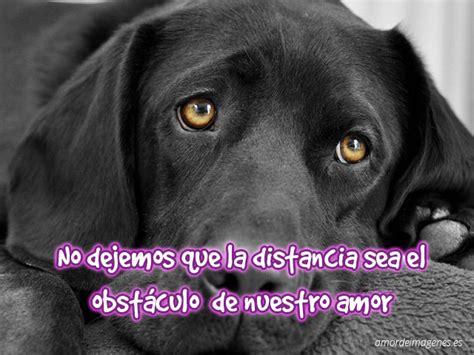 imagenes tristes de amor con animales imagenes de amor de perritos y gatitos